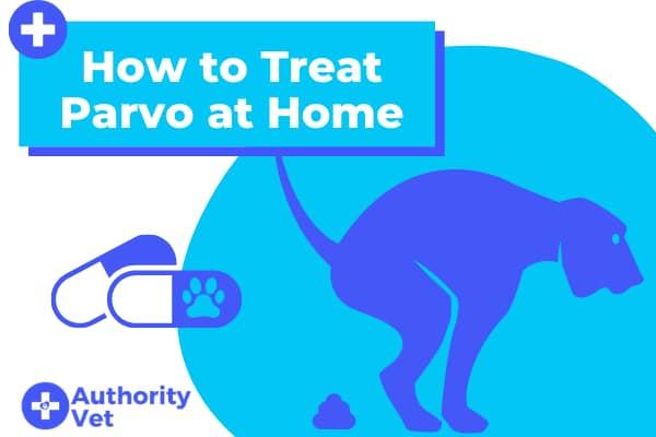 How to Treat Parvo at Home